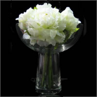 White peony flower bouquet hire, Auckland